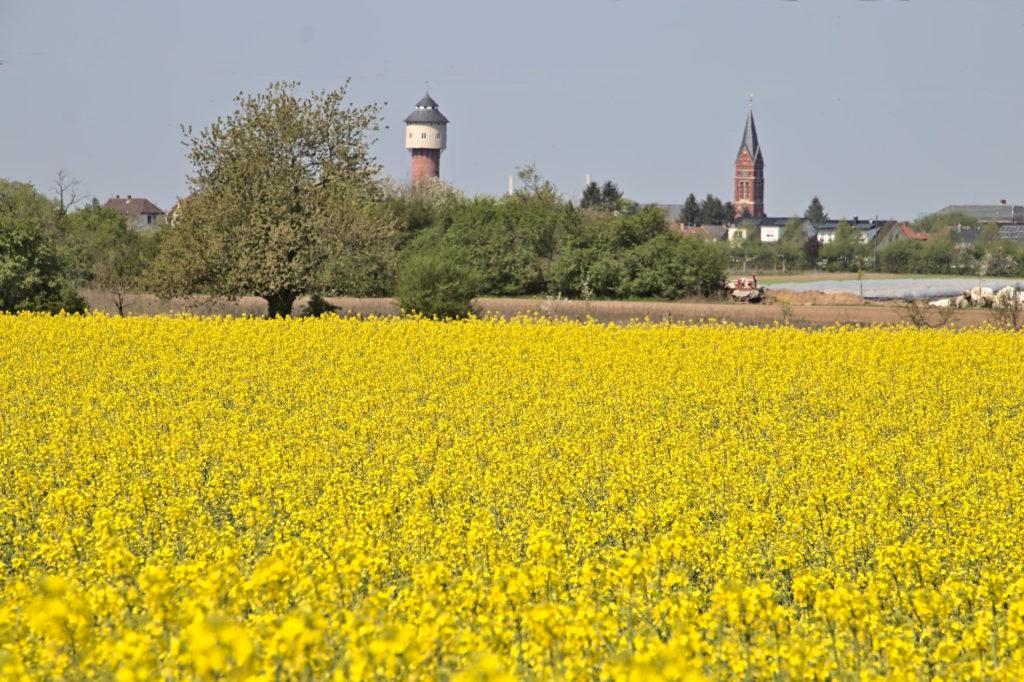 Wasserturm und Kirchturm von Plankstadt hinter einem Rapsfeld ohne Stromleitungen.