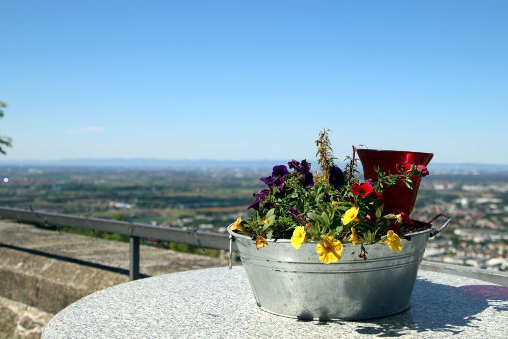 Wachenburg Blick in die Pfalz