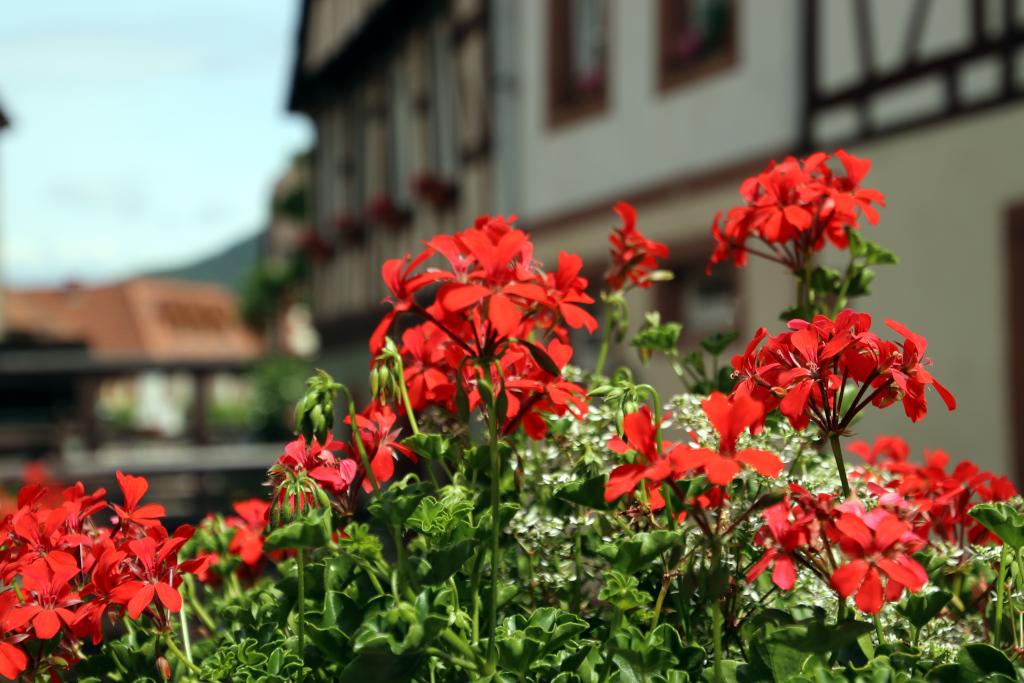 Pfälzerwald-Tour